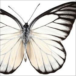 Servetter Butterfly