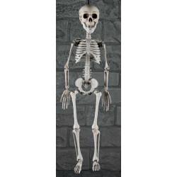 Hängande Skelett
