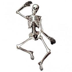 Pappers Skelett