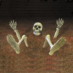 Skelettdelar Birger för trädgården
